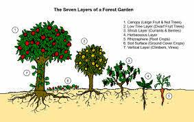 Seven layers of permaculture