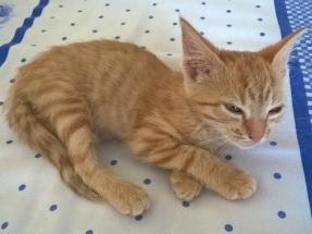 A kitten of catacter!